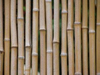 Bamboo fence. Maui, HI October, 2009