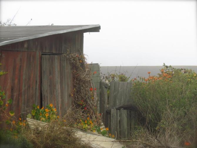 Wildflowers near Mendocino, CA  October, 2012.
