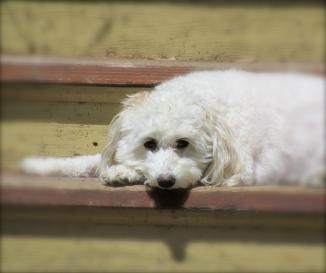 Dog enjoying the sun on the porch.  May, 2012.
