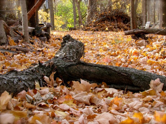 Forest floor in the Fall. Near Mattoon, IL October, 2012