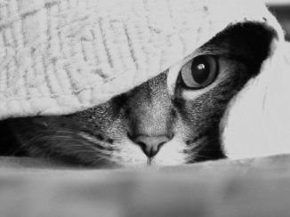 Under surveillance. (My feline companion)- July 31, 2013