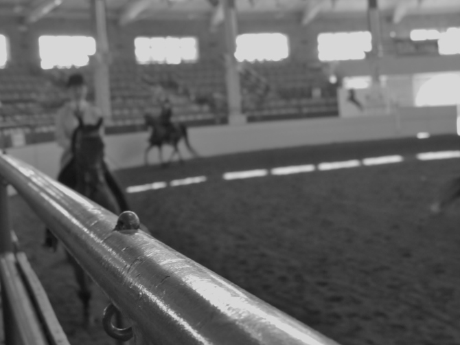 Colosseum at the State Fair Grounds, Springfield, IL.  Morgan Horse Show.  August 30, 2013.