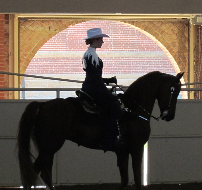 Western dressage at the Morgan Horse Show, Springfield, IL.  August 30, 2013.