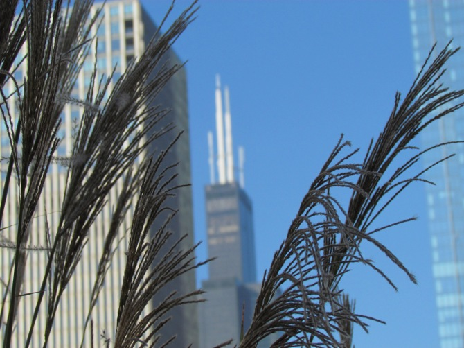 Willis (Sears) Tower from Millennium Park.  Chicago, IL  October 2013.